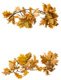 一棵秋季橡木分支 图库摄影