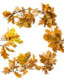 一棵秋季橡木分支 免版税库存照片