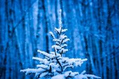 一棵积雪的圣诞树的特写镜头视图 库存照片
