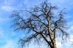 一棵空的树 库存照片