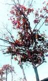 一棵红色树 库存照片