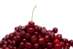 一棵红色樱桃的极少数在白色背景的 库存照片