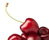 一棵红色樱桃的极少数 库存图片