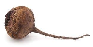 一棵红色甜菜 免版税库存图片