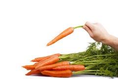 一棵红萝卜 免版税库存图片