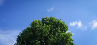 一棵绿色树的上面在蓝天下晴天 库存图片
