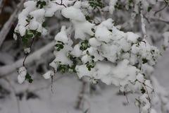 一棵绿色树的布什在雪的 冬天 免版税库存照片
