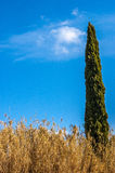 一棵美丽的树在天际的森林里在日出期间 免版税库存图片