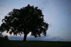 一棵美丽的树的剪影 免版税库存照片