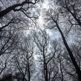 一棵美丽的树的看法 免版税图库摄影
