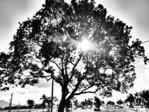 一棵美丽的树 免版税图库摄影