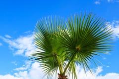 一棵美丽的棕榈树的美丽如画的叶子在一种热带手段的海滩的反对天空的 图库摄影
