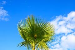 一棵美丽的棕榈树的美丽如画的叶子在一种热带手段的海滩的,点燃由太阳反对天空 免版税图库摄影