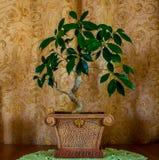 一棵美丽的盆景树的照片在棕色背景的 免版税库存照片