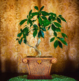 一棵美丽的盆景树的照片在棕色背景的 库存照片