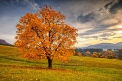 一棵美丽的落叶树 图库摄影