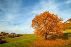 一棵美丽的落叶树 免版税库存照片