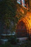 一棵老城堡长满的常春藤的墙壁,与美好的照明设备 库存照片
