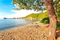 一棵老杉树的树干在海滩的在安静的海湾 库存图片