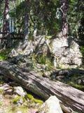 一棵老树的下落的树干 库存图片