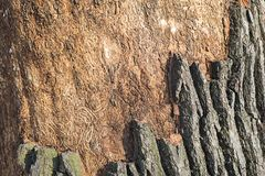 一棵老树的吠声的特写镜头 库存图片