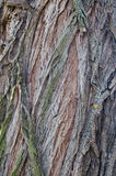 一棵老树的吠声纹理  库存图片