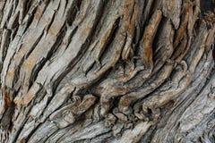 一棵老树的吠声 库存照片