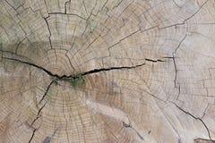 一棵老树的圆环 库存图片