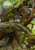 一棵老树的日志用青苔和地衣盖了在圣地米格尔a 免版税图库摄影