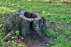 一棵老树的树桩 免版税图库摄影