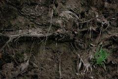 一棵老树的根的纹理在地面的与绿草和蜘蛛网 容量墙纸 免版税库存照片