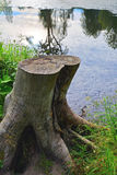 一棵老树的残余部分在农庄公园Znamenskoye-Rayok庄园(18世纪)在Torzhok区 库存照片