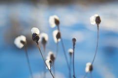 一棵老植物在冬天 免版税库存图片