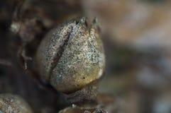 一棵老植物 免版税库存照片