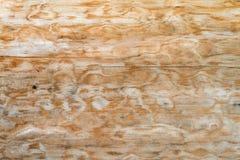 一棵自然树的纹理与一个异常的结构的 库存照片