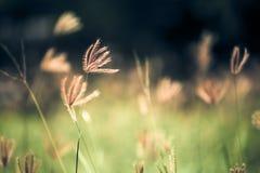 一棵花草在庭院里 库存图片