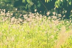 一棵花草在庭院里 库存照片