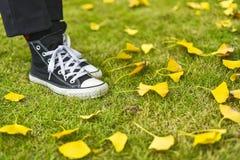 一棵草在公园徒步 库存照片