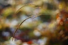 一棵草有美好的bokeh背景 库存图片