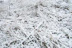 一棵草的纹理在雪下的 免版税库存照片