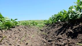 一棵草的绿色部分与土壤的和根在蓝天下 股票录像