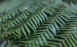 一棵蕨树的抽象照片与有选择性的迷离的 免版税图库摄影