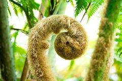 一棵蕨的绿色新芽在热带森林里 免版税图库摄影