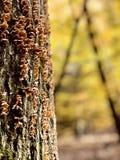 一棵蘑菇装满的树在克利夫兰MetroParks -帕尔马-俄亥俄 库存图片