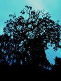 一棵被困扰的树在冬天 免版税库存照片