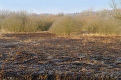 一棵被烧的草的领域 图库摄影