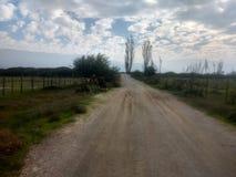 一棵路和草在背景天空 库存照片