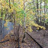 一棵退役的铁路线和年轻树 库存图片