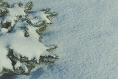 一棵针叶树的分支在雪的 免版税库存图片