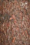一棵针叶树的老吠声的一个概略的样式 免版税库存照片